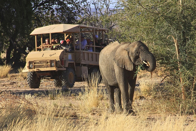 Twyfelfontein country lodge - elephant drive
